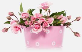 Bloemerij rosas - Eemnes