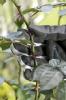 GARDENA Struikonderhoudhandschoen Maat 7 / S